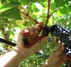 https://www.tp24.it/immagini_articoli/07-09-2019/1567850989-0-litalia-primo-produttore-mondiale-migliora-qualita-sicilia-trapanese.jpg