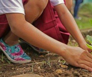 https://www.tp24.it/immagini_articoli/07-10-2019/1570446454-0-trapani-bambini-piantano-alberelli-quartiere-fontanelle.jpg