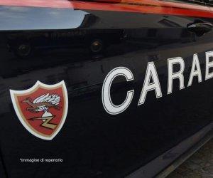 https://www.tp24.it/immagini_articoli/07-10-2019/1570447505-0-mazara-cane-difficolta-ss115-soccorso-carabinieri-automobilisti.jpg