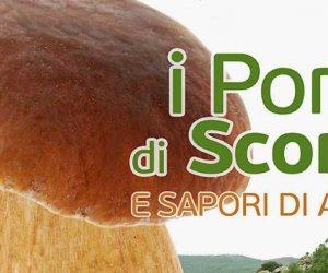 https://www.tp24.it/immagini_articoli/07-11-2018/1541576307-0-porcini-scorace-sapori-dautunno-buseto-evento-valorizzare-bosco.jpg
