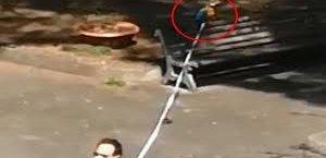 https://www.tp24.it/immagini_articoli/08-04-2020/1586322650-0-esce-portare-guinzaglio-pappagallo-multato-carabinieri-video.jpg