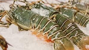 https://www.tp24.it/immagini_articoli/08-06-2019/1559989453-0-ristorante-valderice-vendeva-pesce-idoneo-consumo-multe-sequestri.jpg