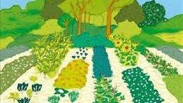 https://www.tp24.it/immagini_articoli/08-06-2019/1560010700-0-palmeri-scegliere-lagroecologia-tutelare-made-sicily.jpg