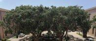 https://www.tp24.it/immagini_articoli/08-07-2020/1594227880-0-marsala-al-comune-sospesi-i-rientri-pomeridiani-cimitero-tolte-le-restrizioni.jpg