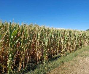https://www.tp24.it/immagini_articoli/08-10-2017/1507446689-0-sicilia-seconda-italia-numero-imprese-agricole.jpg