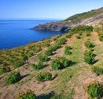 https://www.tp24.it/immagini_articoli/09-04-2018/1523295278-0-nominato-consiglio-direttivo-parco-nazionale-isola-pantelleria.jpg