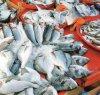 https://www.tp24.it/immagini_articoli/09-04-2019/1554827833-0-trapani-giro-vite-dellamministrazione-pescivendoli-abusivi.jpg