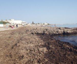 https://www.tp24.it/immagini_articoli/09-06-2019/1560096257-0-marsala-arrivato-gran-caldo-spiagge-pero-sono-sporche-impraticabili.jpg