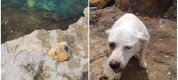 https://www.tp24.it/immagini_articoli/09-07-2019/1562692025-0-valderice-andra-processo-padrone-cane-buttato-mare-pietra-collo.jpg