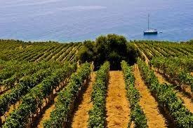 https://www.tp24.it/immagini_articoli/09-08-2019/1565366131-0-sicilia-inizia-vendemmia-condizioni-climatiche-favorevoli-buon-raccolto.jpg