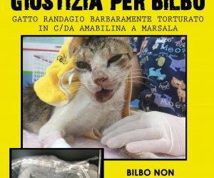 https://www.tp24.it/immagini_articoli/09-09-2016/1473411957-0-marsala-e-gli-animali-torturati-l-oipa-intervengano-le-autorita-blitz-per-20-cani.jpg