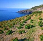 https://www.tp24.it/immagini_articoli/09-09-2018/1536476327-0-pantelleria-disattesa-produzione-zibibbo-raccolti-solo-mila-quintali.jpg