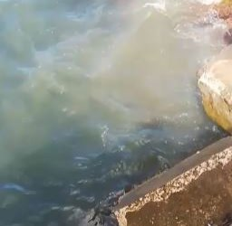 https://www.tp24.it/immagini_articoli/09-09-2019/1568019976-0-porto-marsala-scarico-fognario-sbocca-direttamente-mare.jpg