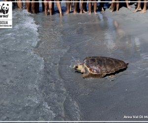 https://www.tp24.it/immagini_articoli/09-09-2021/1631193915-0-aveva-ingoiato-tanta-plastica-la-tartaruga-nippiteddra-torna-libera.jpg