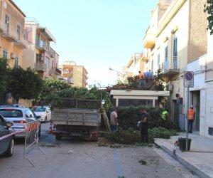 https://www.tp24.it/immagini_articoli/09-10-2018/1539074955-0-marsala-potatura-alberi-mario-nuccio-rimozione-forzata.jpg