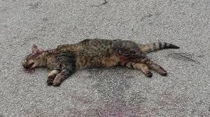 https://www.tp24.it/immagini_articoli/09-11-2018/1541744198-0-sevizia-uccide-gatti-marsala-taglia-10000-euro-notizie.jpg