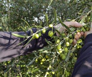 https://www.tp24.it/immagini_articoli/09-11-2019/1573286966-0-azienda-agricola-castelvetrano-lavoratori-nero-prendevano-reddito.jpg