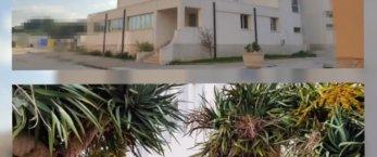 https://www.tp24.it/immagini_articoli/10-01-2021/1610315123-0-il-college-damiani-apre-le-porta-anche-ad-altre-scuole-di-marsala.jpg