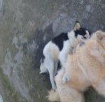 https://www.tp24.it/immagini_articoli/10-02-2019/1549796908-0-marsala-cani-avvelenati-nessuno-rimuove-loro-carcasse.jpg