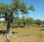 https://www.tp24.it/immagini_articoli/10-02-2019/1549834590-0-sicilia-obiettivi-vicini-sondaggio-sicilia-occidentale.jpg