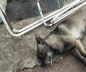 https://www.tp24.it/immagini_articoli/10-02-2020/1581326439-0-alcamo-uccide-cane-butta-strada.jpg