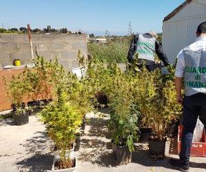 https://www.tp24.it/immagini_articoli/10-05-2018/1525966308-0-alcamo-scoperte-quattro-piantagioni-marijuana-arrestate-persone.jpg
