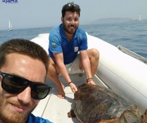 https://www.tp24.it/immagini_articoli/10-08-2017/1502374799-0-favignana-distribuzione-sacchetti-lorganico-salvate-altre-tartarughe.jpg
