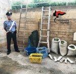 https://www.tp24.it/immagini_articoli/10-10-2018/1539161962-0-rubavano-olive-campobello-arrestati-carabinieri.jpg
