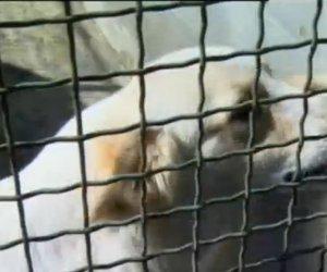 https://www.tp24.it/immagini_articoli/10-11-2018/1541846802-0-paceco-scoperto-rifugio-cani-abusivo.jpg