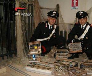 https://www.tp24.it/immagini_articoli/10-11-2019/1573379790-0-salaparuta-carabinieri-liberano-uccellini-vittime-bracconaggio-denunce.jpg