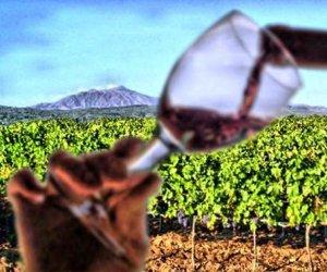https://www.tp24.it/immagini_articoli/11-02-2019/1549890835-0-cresce-settore-vitivinicolo-siciliano-trapani-catania-maggior-numero-aziende.jpg