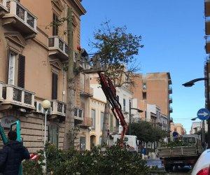 https://www.tp24.it/immagini_articoli/11-04-2019/1554967564-0-marsala-marciapiede-killer-roma-comune-sega-lalbero.jpg
