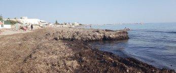 https://www.tp24.it/immagini_articoli/11-06-2019/1560285554-0-caso-alghe-sulle-spiagge-marsala-lestate-comincia-male.jpg