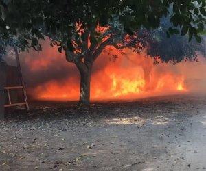 https://www.tp24.it/immagini_articoli/11-08-2018/1533945214-0-vasto-incendio-parco-selinunte-carusoitutto-tornato-normalita.jpg