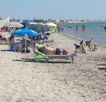 https://www.tp24.it/immagini_articoli/11-08-2018/1533979018-0-bella-spiaggia-libera-marsala-troppi-cani-randagi.jpg