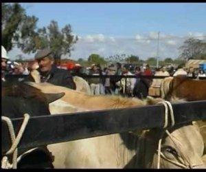 https://www.tp24.it/immagini_articoli/11-08-2019/1565536719-0-partanna-mercato-bestiame-sospeso-agosto.jpg