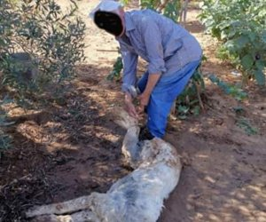 https://www.tp24.it/immagini_articoli/11-09-2019/1568208116-0-torture-sugli-animali-sicilia-cane-picchiato-legato-bruciato-vivo.jpg