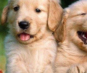 https://www.tp24.it/immagini_articoli/11-11-2013/1384196383-0-giovedi-a-mazara-l-inaugurazione-del-rifugio-sanitario-per-cani.jpg