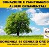 https://www.tp24.it/immagini_articoli/12-01-2018/1515752050-0-stelle-alcamo-donano-alberi-citta.jpg
