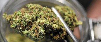 https://www.tp24.it/immagini_articoli/12-02-2021/1613128899-0-la-cannabis-terapeutica-e-il-paradosso-di-marsala.jpg