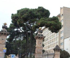 https://www.tp24.it/immagini_articoli/12-07-2019/1562911619-0-sicilia-ricostruzione-cranio-salva-vita-bambino-anni-caduto-bici.jpg