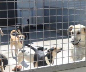 https://www.tp24.it/immagini_articoli/12-08-2019/1565622672-0-marsala-troppi-randagi-canile-sovraffollato-trasferiti-cani.jpg