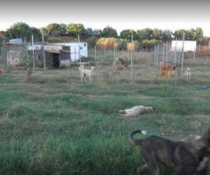 https://www.tp24.it/immagini_articoli/12-09-2015/1442084330-0-castelvetrano-cani-maltrattati-sequestrati-due-canili-le-foto-shock.jpg