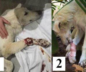 https://www.tp24.it/immagini_articoli/12-09-2016/1473634307-0-animali-maltrattati-a-castelvetrano-salvato-un-cane-preso-a-fucilate.jpg