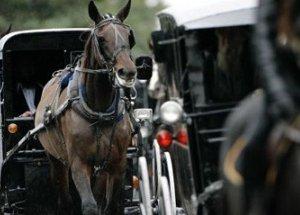 https://www.tp24.it/immagini_articoli/12-10-2013/1381585779-0-carrozze-con-cavalli-a-trapani-proteste-degli-animalisti.jpg