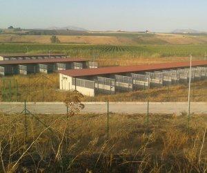 https://www.tp24.it/immagini_articoli/12-12-2019/1576146106-0-solo-rifiuti-trapani-servizi-gestira-anche-canile-comunale.jpg