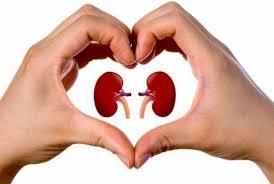 https://www.tp24.it/immagini_articoli/13-03-2019/1552488001-0-trapani-medical-center-partecipa-ogni-anno-giornata-mondiale-rene.jpg