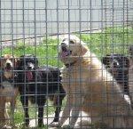 https://www.tp24.it/immagini_articoli/13-04-2018/1523603495-0-alcamo-apre-rifugio-sanitario-cani.jpg