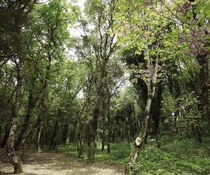 https://www.tp24.it/immagini_articoli/13-06-2019/1560409585-0-progetto-valorizzare-bosco-sacro-erice.jpg