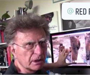 https://www.tp24.it/immagini_articoli/13-07-2021/1626161198-0-anche-red-ronnie-segue-il-caso-del-cavallo-di-favignana-rimasto-cieco.jpg